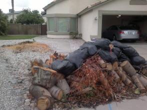 Wood Pile 2